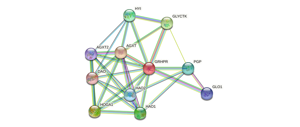 GRHPR protein (human) - STRING interaction network
