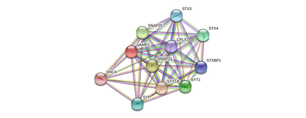 VAMP2 protein (human) - STRING interaction network