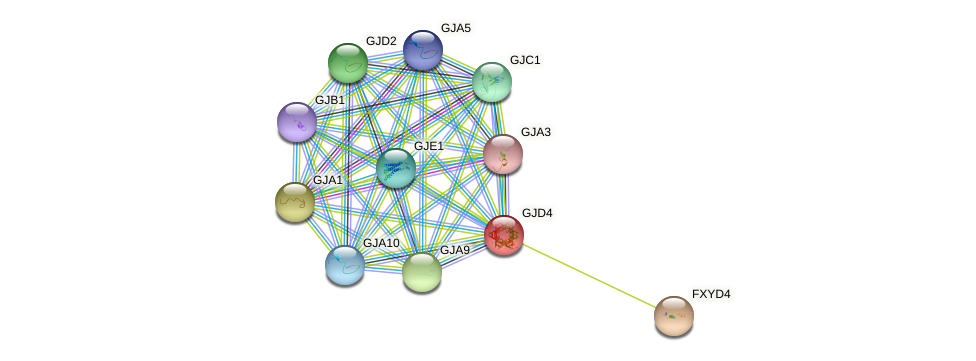 GJD4 protein (human) - STRING interaction network