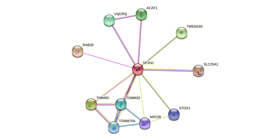 SFXN1 protein (human) - STRING interaction network