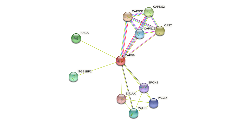 CAPN6 protein (human) - STRING interaction network