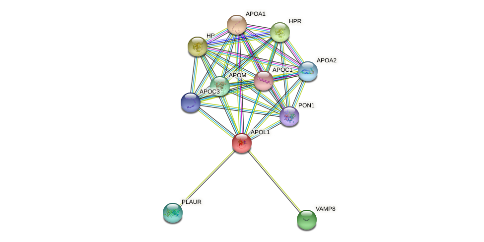 APOL1 protein (human) - STRING interaction network
