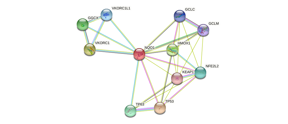 NQO1 protein (human) - STRING interaction network