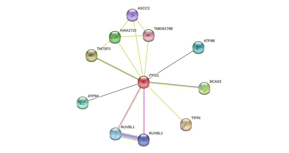 ITFG1 protein (human) - STRING interaction network