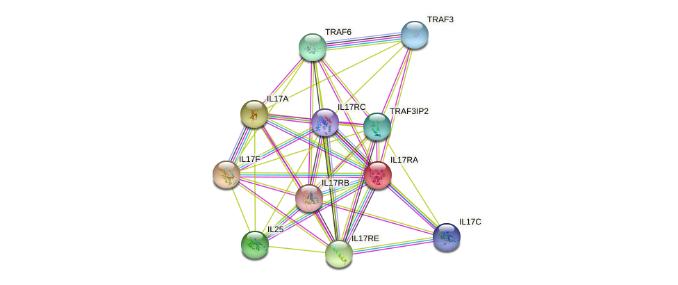 IL17RA protein (human) - STRING interaction network