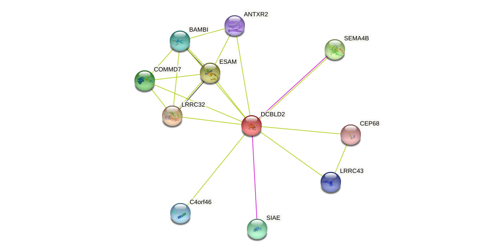 DCBLD2 protein (human) - STRING interaction network