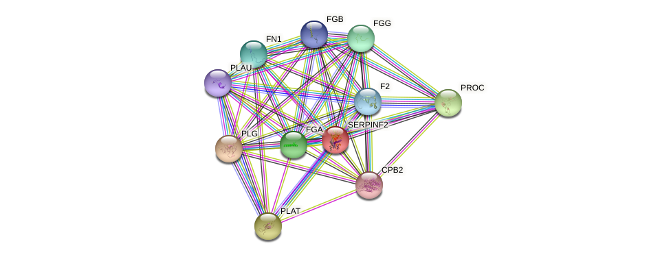 SERPINF2 protein (human) - STRING interaction network