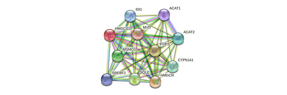 HMGCS1 protein (human) - STRING interaction network