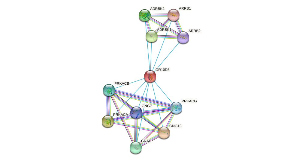 OR10D3 protein (human) - STRING interaction network