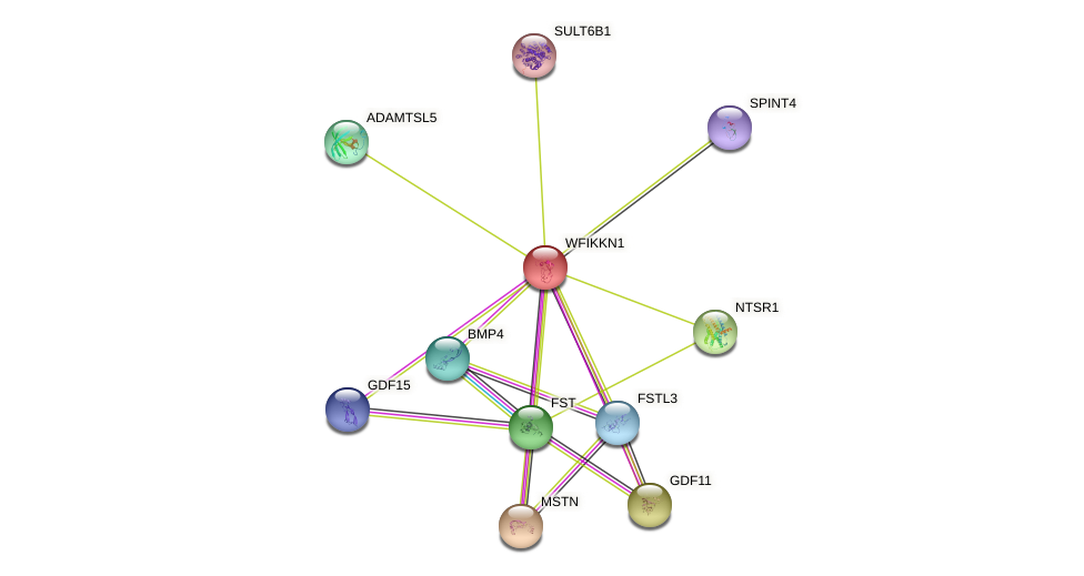 WFIKKN1 protein (human) - STRING interaction network