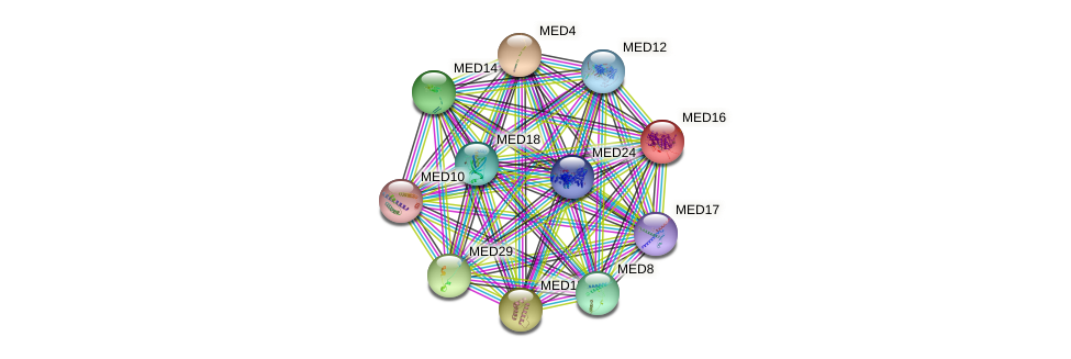 MED16 protein (human) - STRING interaction network