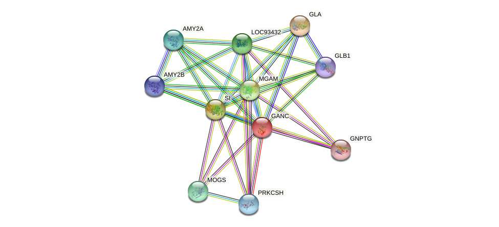 GANC protein (human) - STRING interaction network