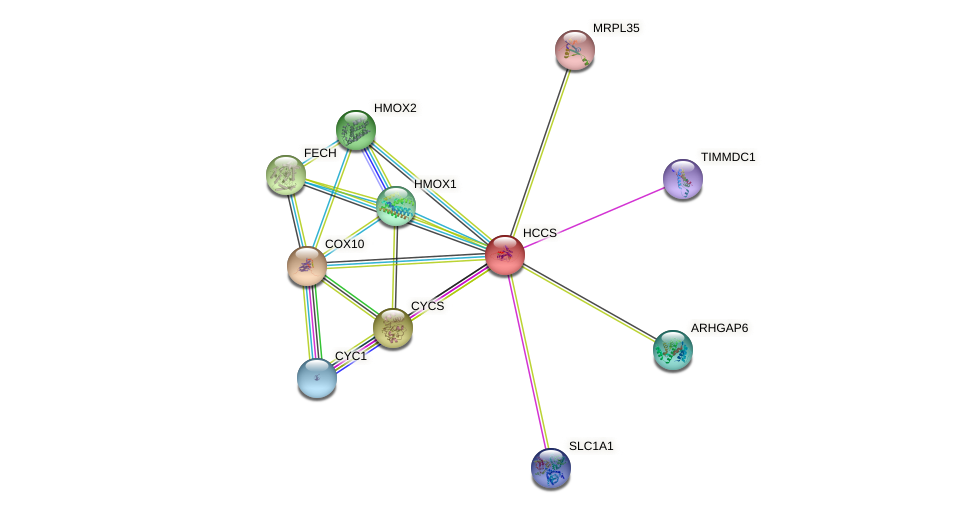 HCCS protein (human) - STRING interaction network