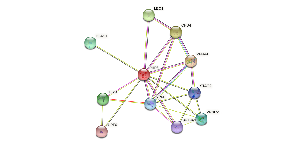 PHF6 protein (human) - STRING interaction network