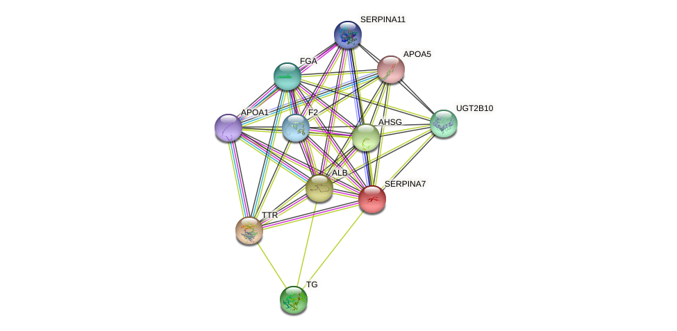 SERPINA7 protein (human) - STRING interaction network