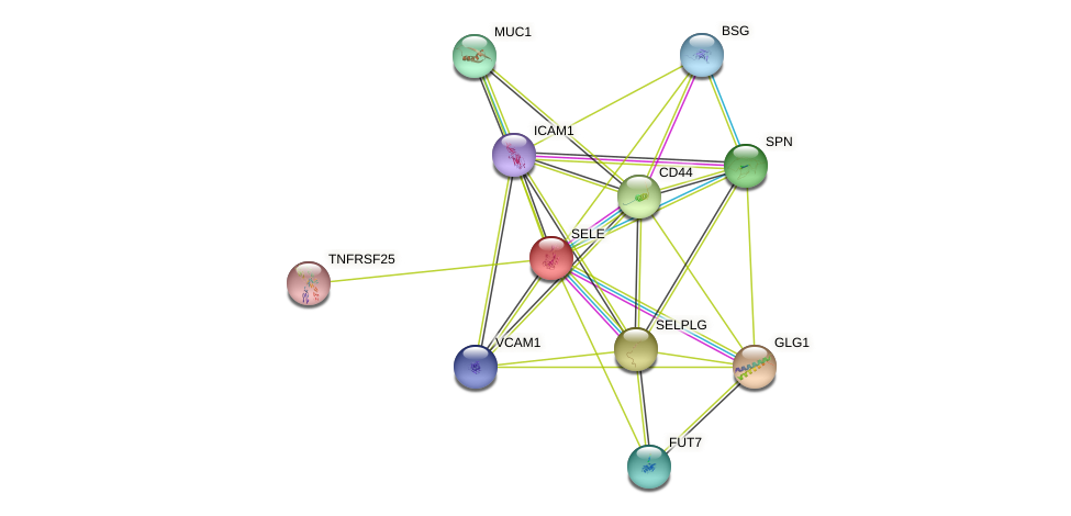 SELE protein (human) - STRING interaction network