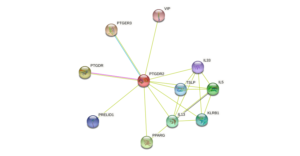 PTGDR2 protein (human) - STRING interaction network