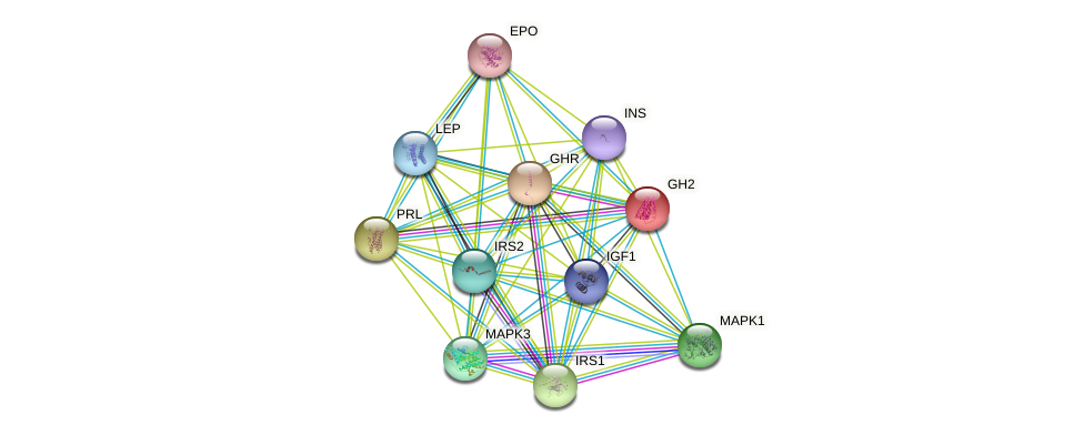 GH2 protein (human) - STRING interaction network