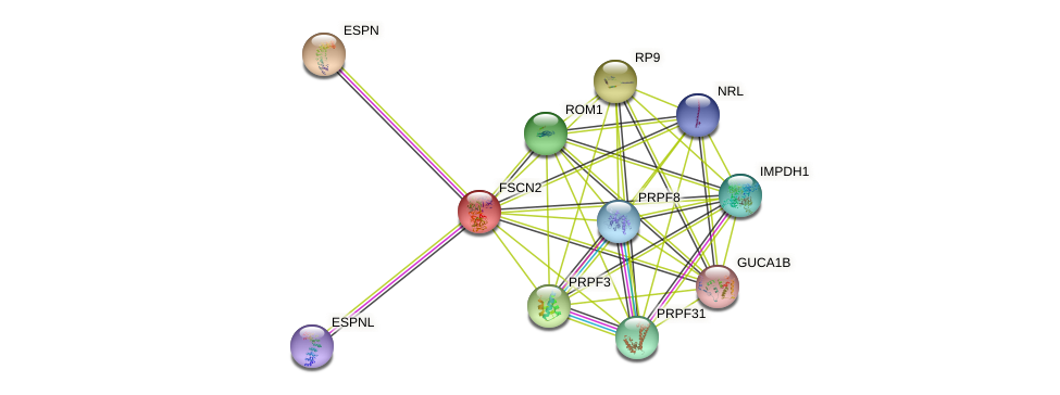 FSCN2 protein (human) - STRING interaction network