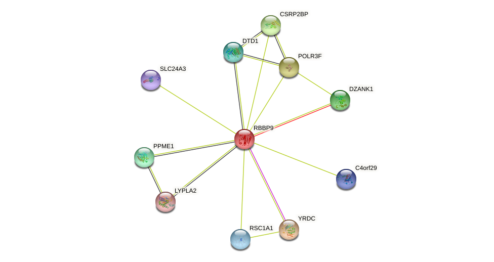 RBBP9 protein (human) - STRING interaction network
