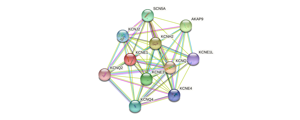 KCNE1 protein (human) - STRING interaction network
