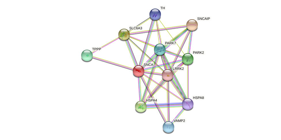 SNCA protein (human) - STRING interaction network