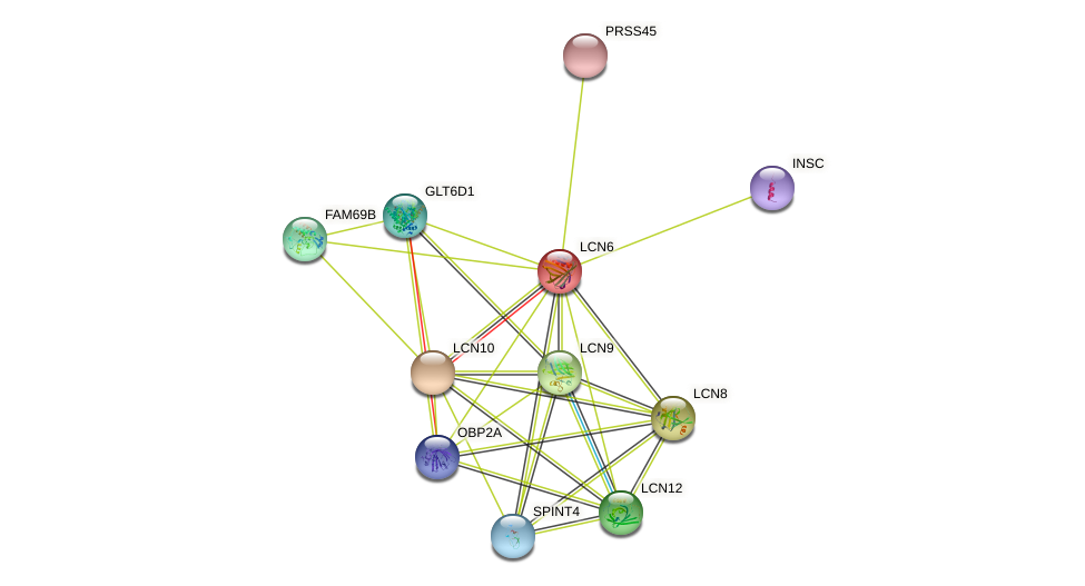 LCN6 protein (human) - STRING interaction network