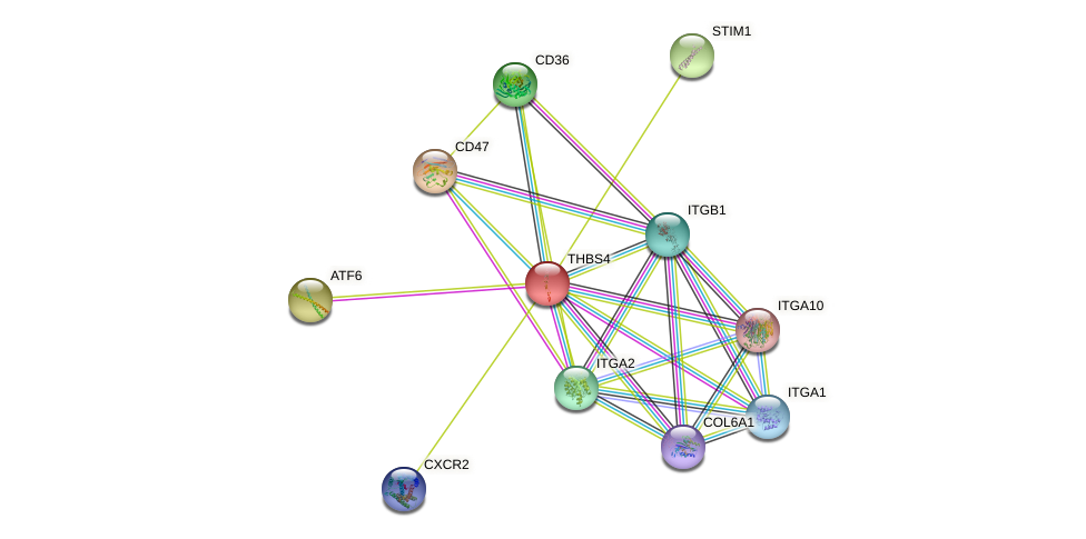 THBS4 protein (human) - STRING interaction network