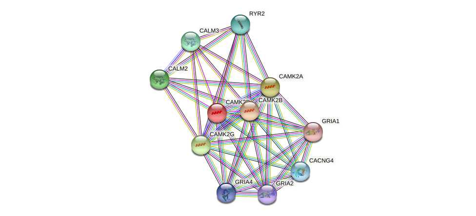 CAMK2D protein (human) - STRING interaction network
