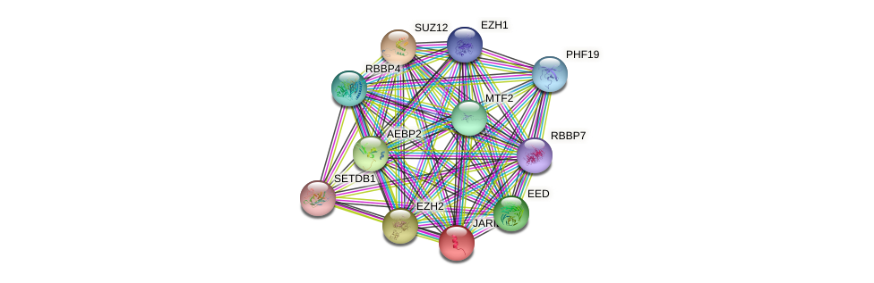 JARID2 protein (human) - STRING interaction network