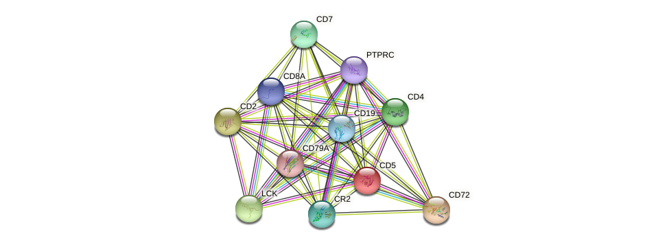 CD5 protein (human) - STRING interaction network