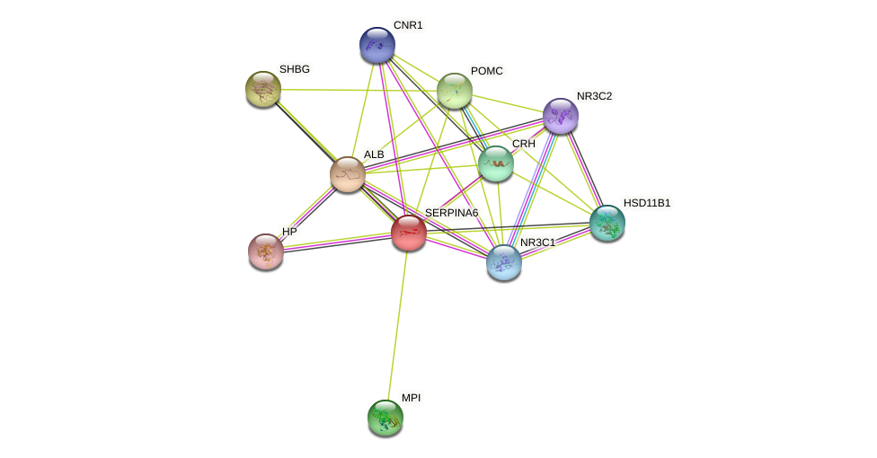SERPINA6 protein (human) - STRING interaction network