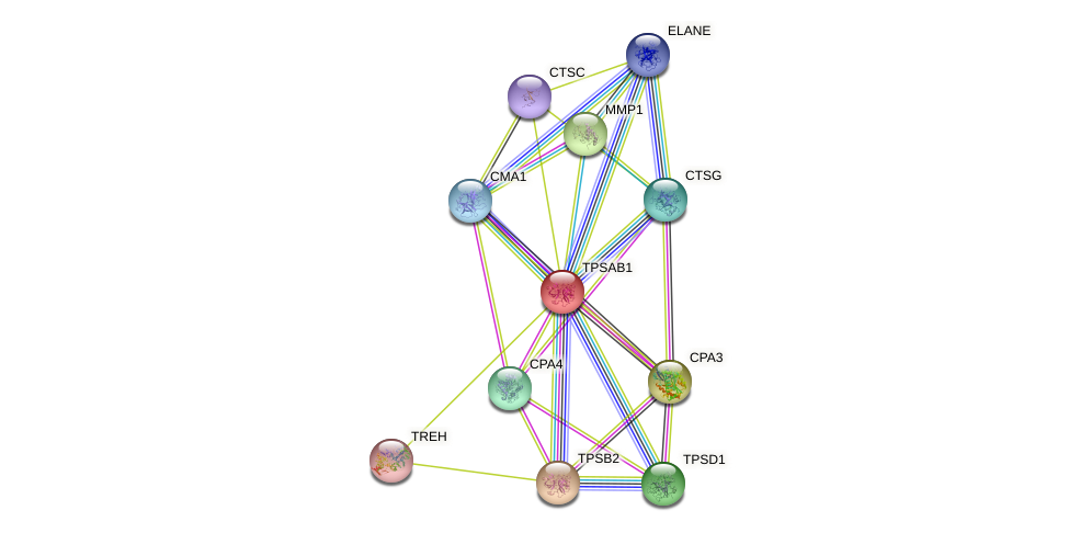 TPSAB1 protein (human) - STRING interaction network