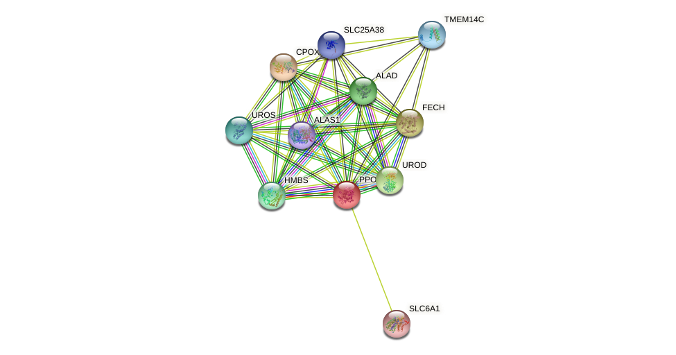 PPOX protein (human) - STRING interaction network
