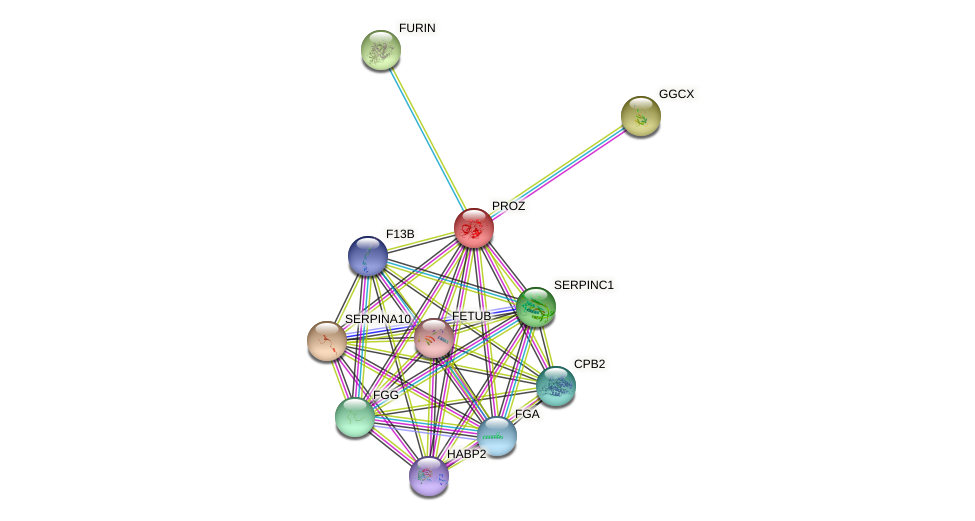PROZ protein (human) - STRING interaction network