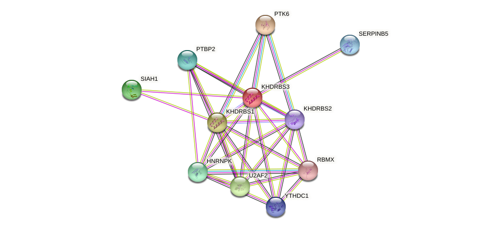 KHDRBS3 protein (human) - STRING interaction network