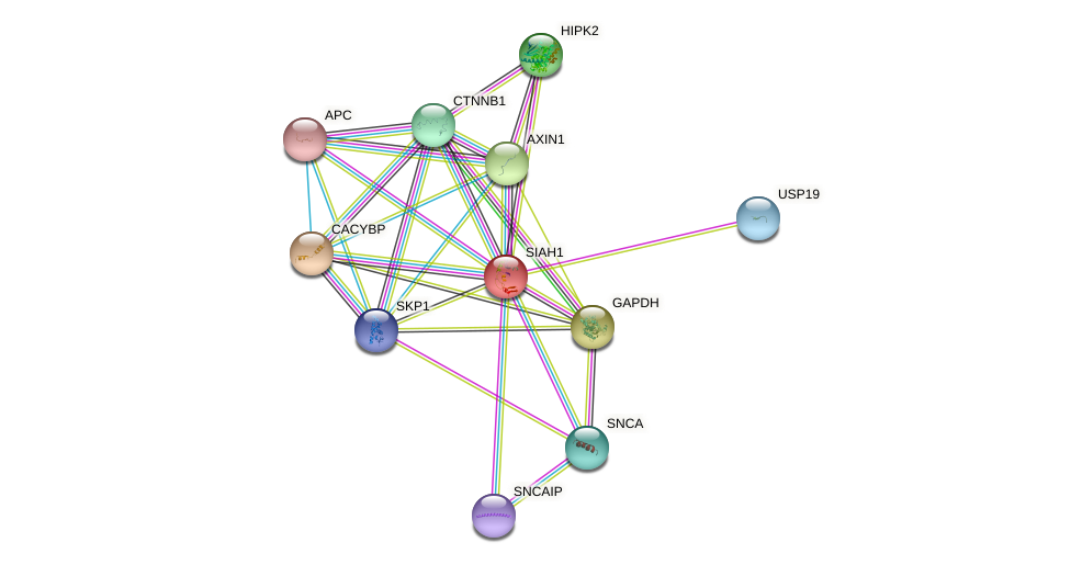 SIAH1 protein (human) - STRING interaction network