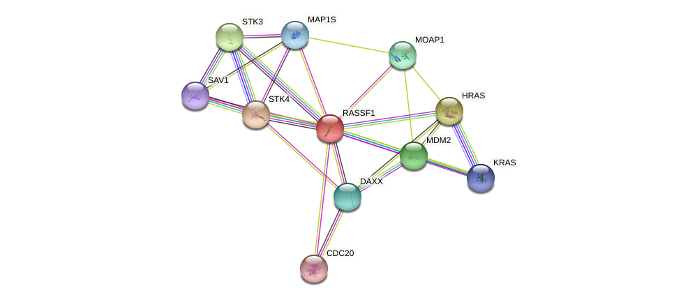 RASSF1 protein (human) - STRING interaction network