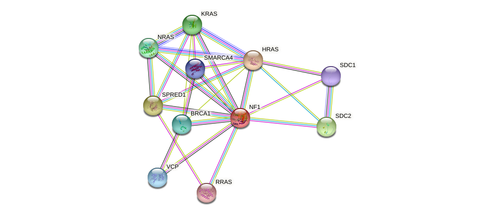 NF1 protein (human) - STRING interaction network