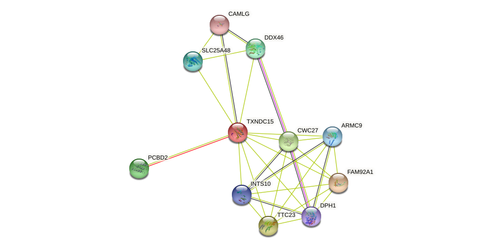 TXNDC15 protein (human) - STRING interaction network