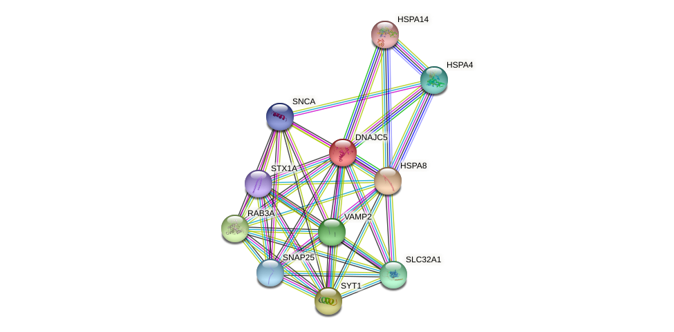 DNAJC5 protein (human) - STRING interaction network