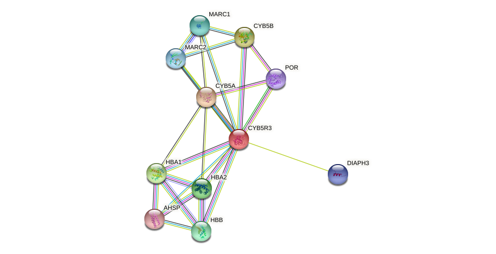 CYB5R3 protein (human) - STRING interaction network