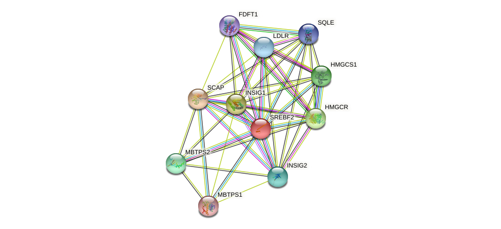 SREBF2 protein (human) - STRING interaction network