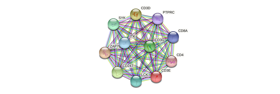 CD3E protein (human) - STRING interaction network