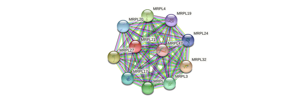 MRPL21 protein (human) - STRING interaction network
