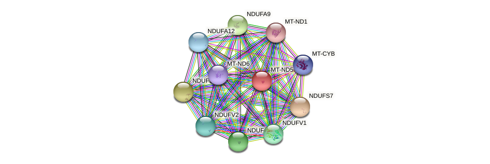 MT-ND5 protein (human) - STRING interaction network