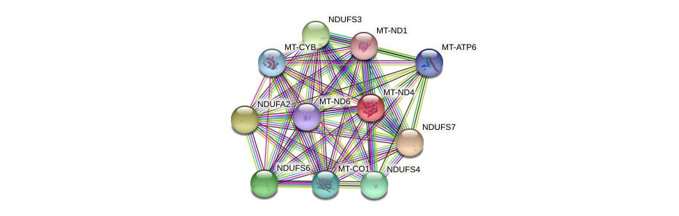 MT-ND4 protein (human) - STRING interaction network