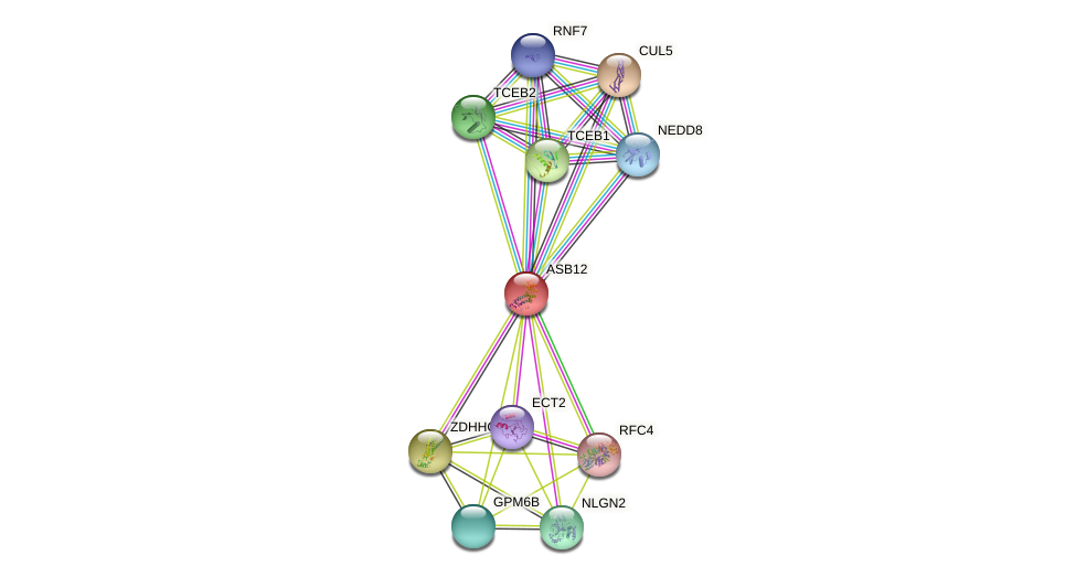 ASB12 protein (human) - STRING interaction network