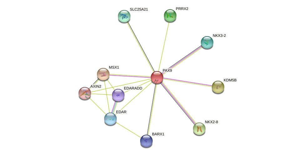 PAX9 protein (human) - STRING interaction network
