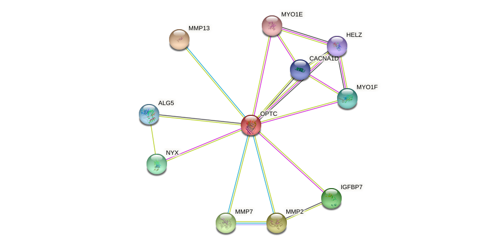 OPTC protein (human) - STRING interaction network
